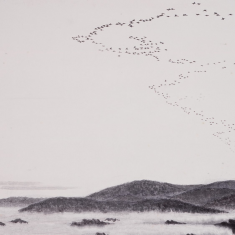 The geese are coming.  Larry Halverson