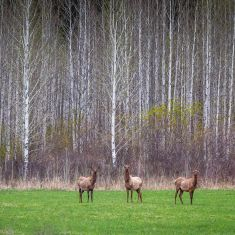 Wildlife Category - Honourable Mention - Gayle Dougall