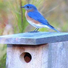 Myles Altmann - student leader at school for the birdhouse building. His bird house already had an occupant.